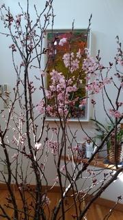 リビングの桜.jpg