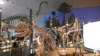 恐竜博物館化石.jpg